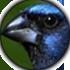Editar botões Fórum com fundo transparente  Com_mo10
