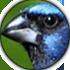 Editar botões Fórum com fundo transparente  Sem_mo10
