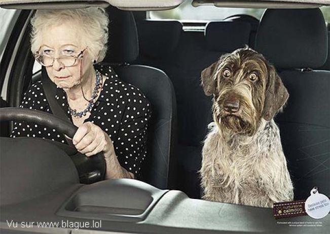 Yvonne, 94 ans, conduit la même voiture depuis 1954 Blague10