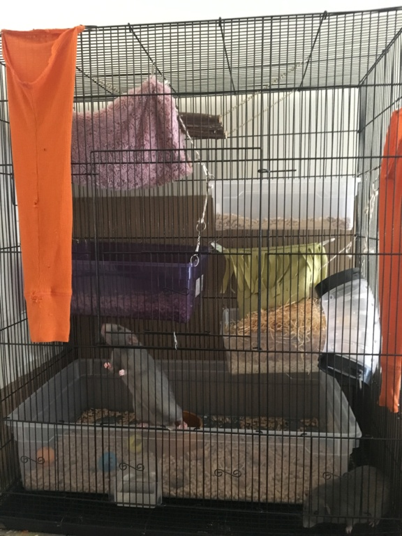 Aménagement cage pratique pour nettoyage  7ed10310