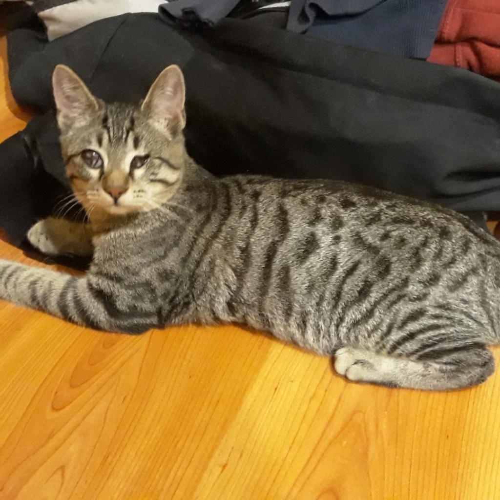 Τυφλό γατάκι αναζητεί σπίτι ! Gatoul11