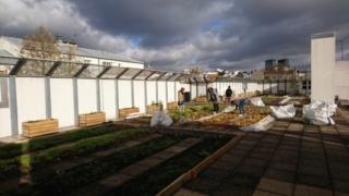Un exemple à suivre de ferme urbaine : 28588210