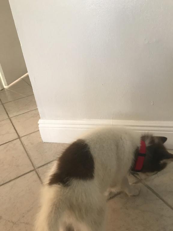 Husky underweight  Fa640010