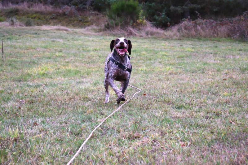 LOOMIS (chienne braque croisée) Img_4311
