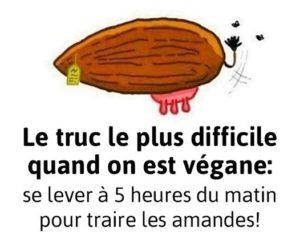 Special vegan !!!!  - Page 8 Lait-a10