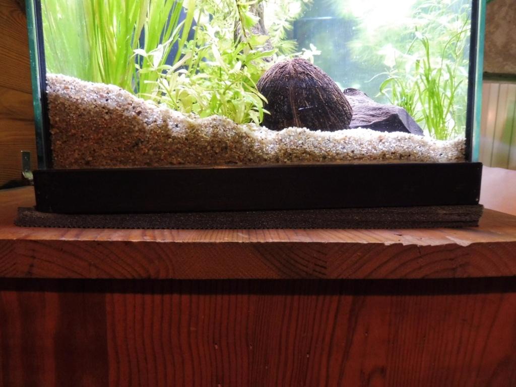 Aquarium penché 0image10