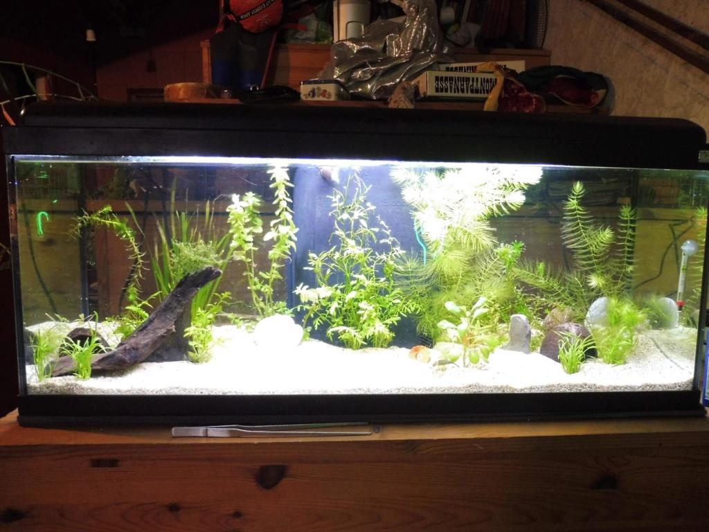 Aquarium penché 0image11