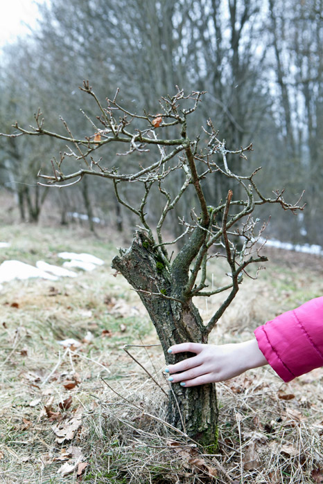 my big german oak - Yamadori 210