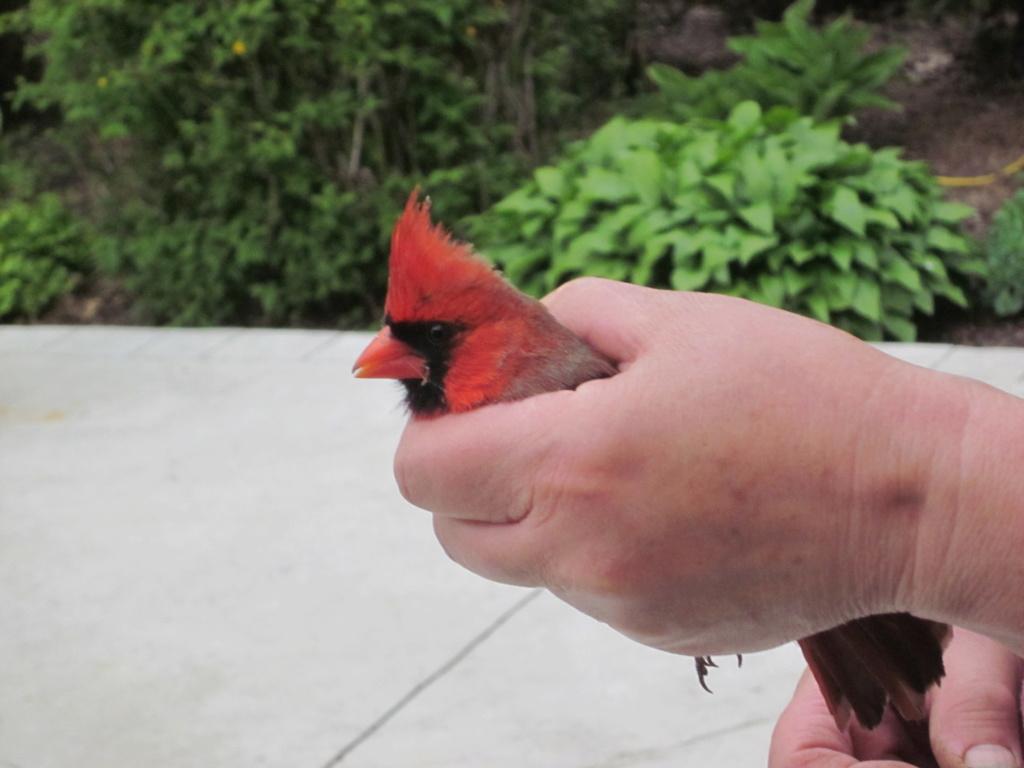 Bird Houses anyone? Jun_1710