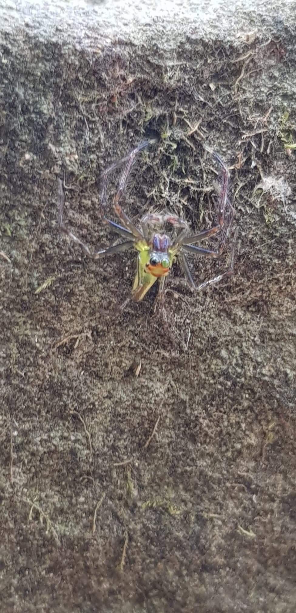 Araignée Cambodge  296c2c10