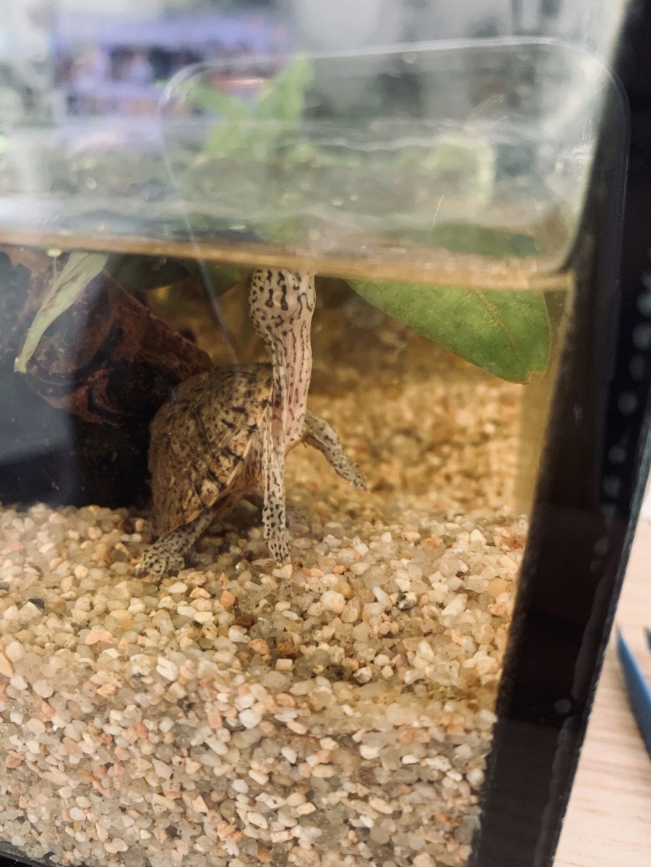 Quels poissons avec mon bébé sternotherus F86ba910