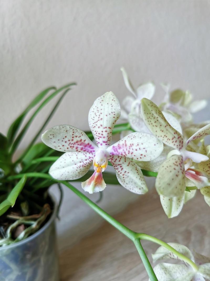 Orchideen-Neuzugang 2 - Seite 33 Img_2138