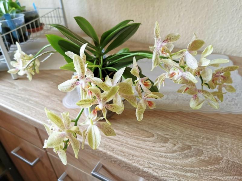Orchideen-Neuzugang 2 - Seite 33 Img_2139