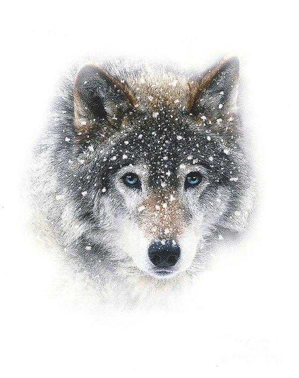 Wolf Totem Snow-w10