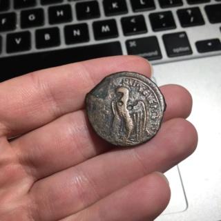 Bronze Ptolemée VIII Evergete incertain  94b68010