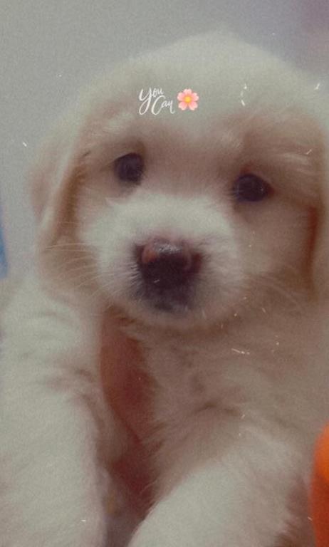 كلب صغير عمر شهرين للبيع Captur19