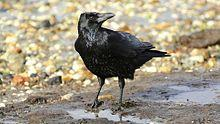 The Crow 220px-10