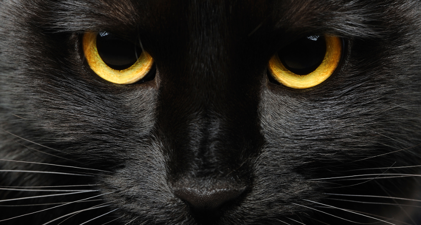 Beware the black cat! 13 Irish superstitions everyone should know about Blackc10