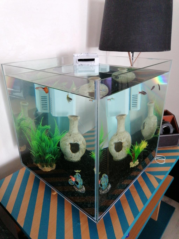 Dépôt inconnu dans le fond de l'aquarium  15995710