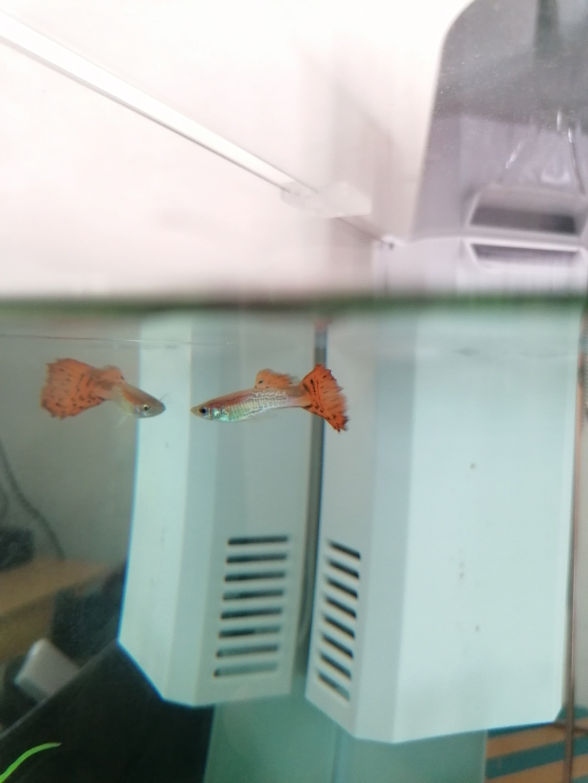 Dépôt inconnu dans le fond de l'aquarium  Img_2014