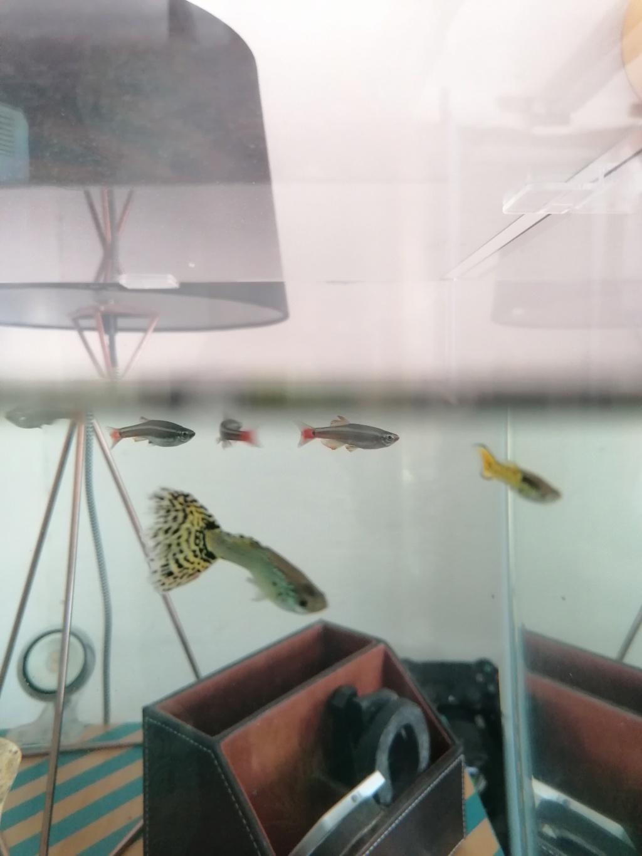Dépôt inconnu dans le fond de l'aquarium  Img_2015