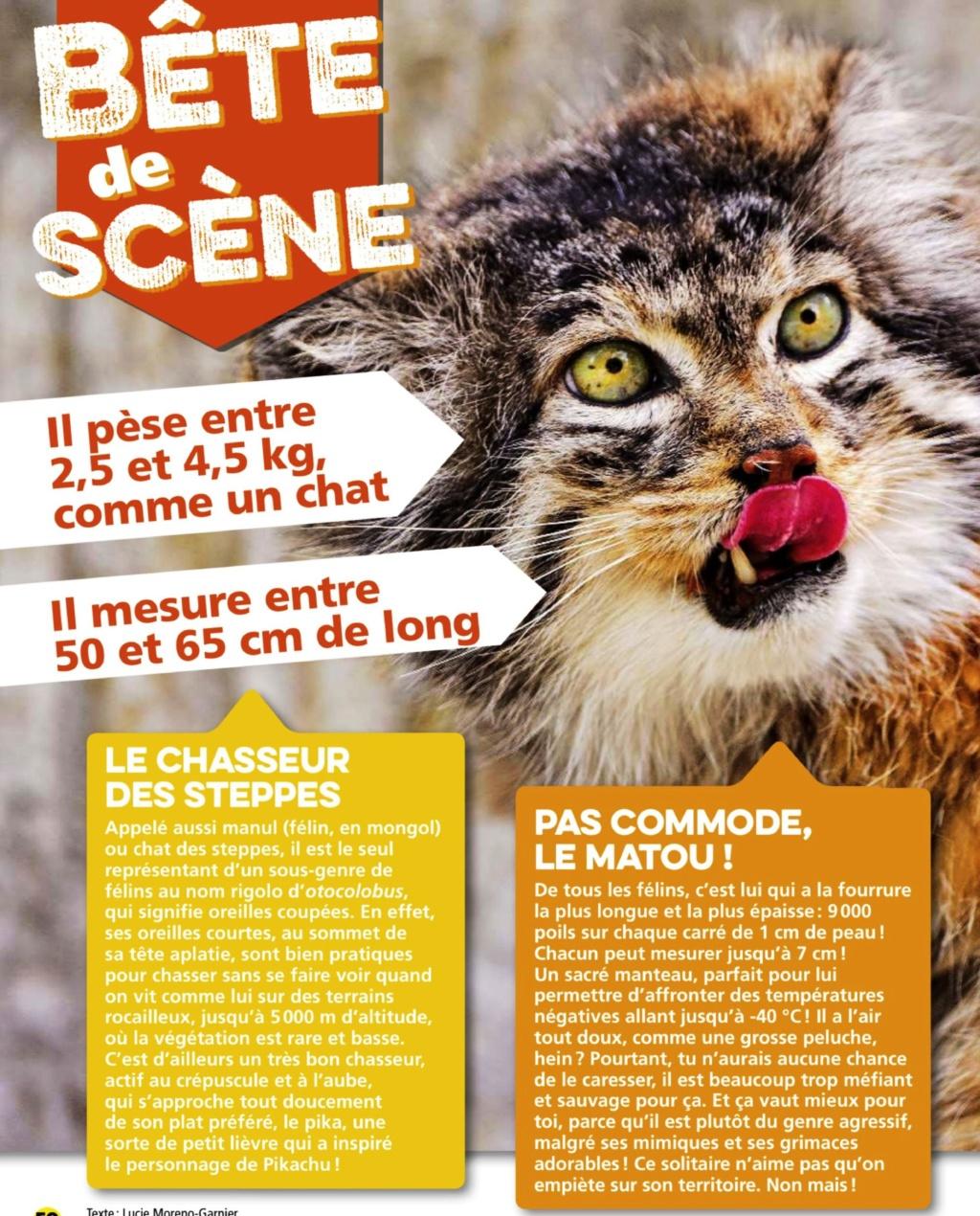 animaux :pas commode le matou Scienc15