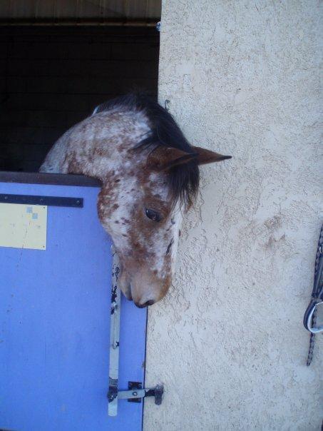 cheval et équitation - NOS expériences personnelles - Page 2 Nir11
