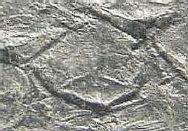 Lepidophloios Sterzel , 1907. 007-ul11