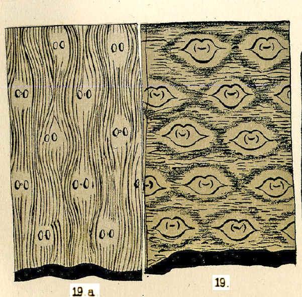 Bothrodendron Lindley et Hutton ,1833. Reticu10