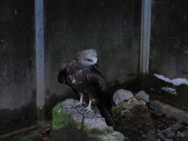 Photos d'oiseaux! 03_01_11