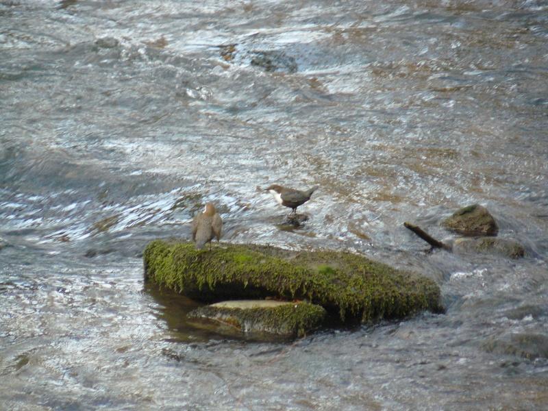 Photos d'oiseaux! 08_02_17