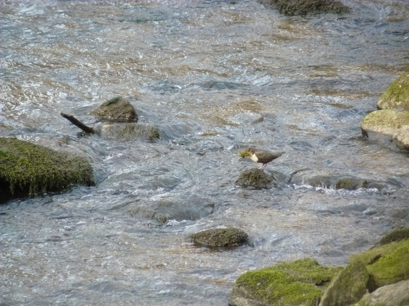 Photos d'oiseaux! 08_02_18