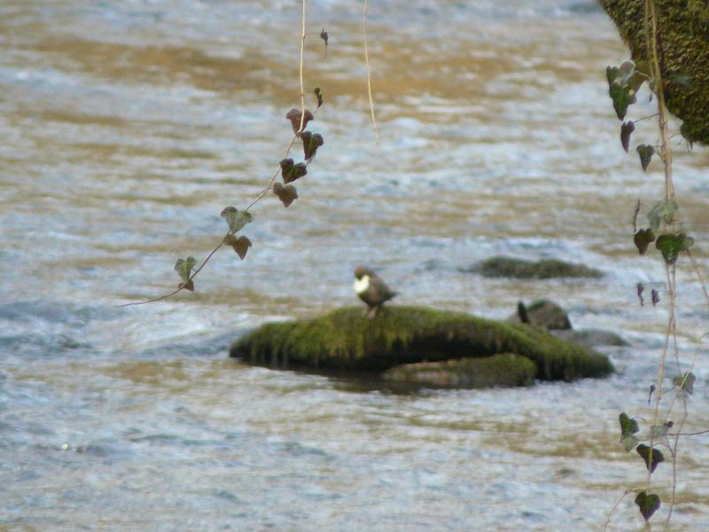 Photos d'oiseaux! 08_02_19