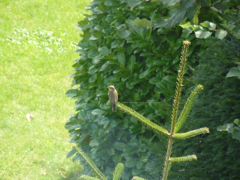Photos d'oiseaux! P1020411