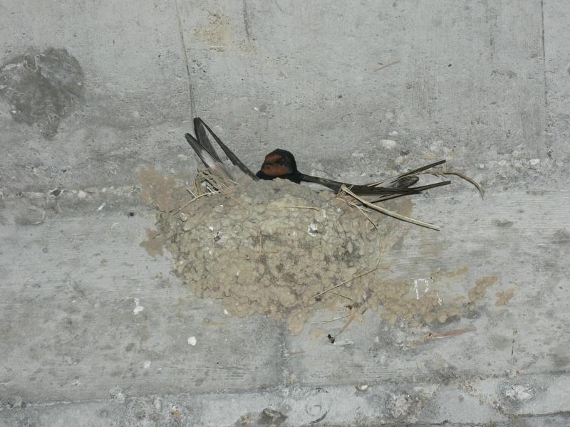 Photos d'oiseaux! P1030410