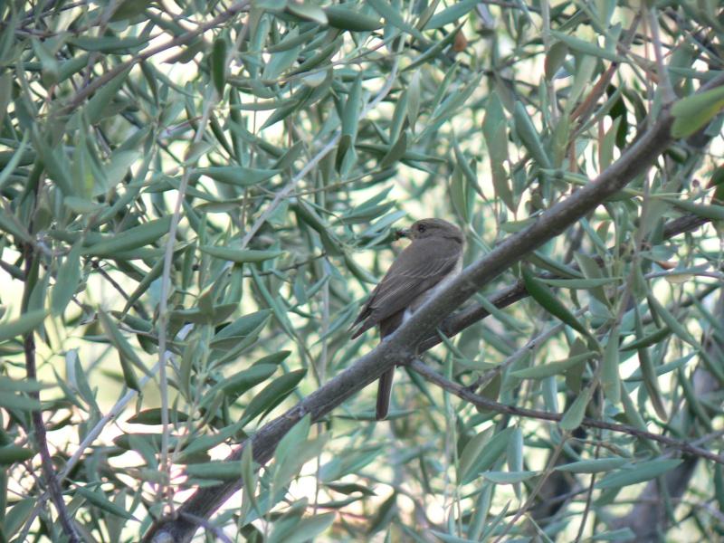 Photos d'oiseaux! Photo_11
