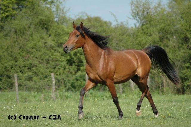Pouliche DSA 2011 03610