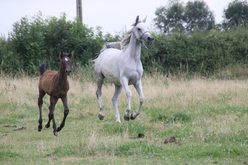 "Concours : ""cheval au galop"" GAGNANTE : TItâne - Page 2 Lacher11"
