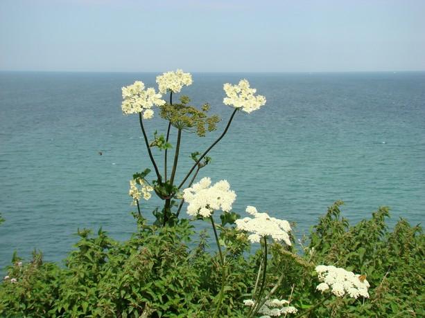 mon voyage en normandie, Courseuilles, Arromanche, OMAHA, Port en Bessin, Douvres la Delivrande Arroma18