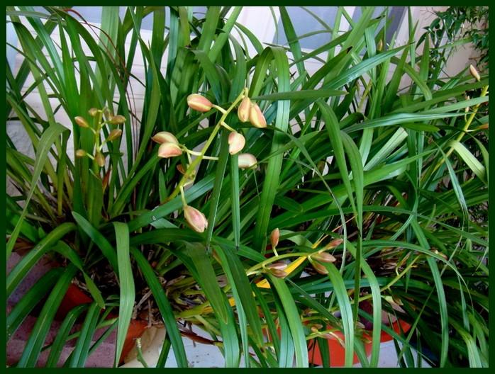 photos fleurs de marie (album 2) Dsc00644