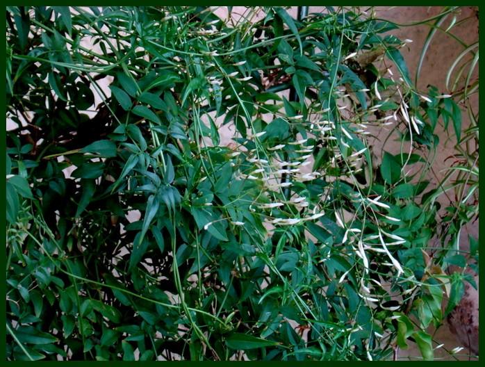 photos fleurs de marie (album 2) Dsc00645