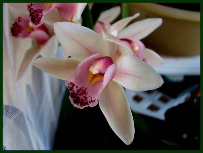 photos fleurs de marie (album 2) Dsc00646