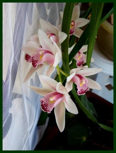 photos fleurs de marie (album 2) Dsc00648