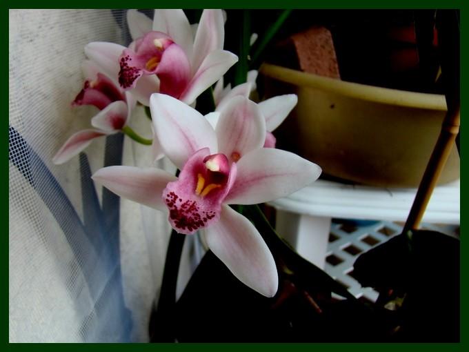 photos fleurs de marie (album 2) Dsc01014