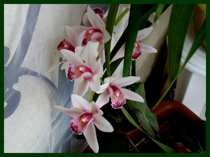 photos fleurs de marie (album 2) Dsc01016