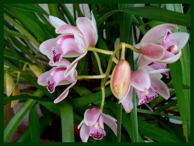 photos fleurs de marie (album 2) Dsc01017