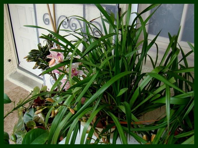 photos fleurs de marie (album 2) Dsc01019