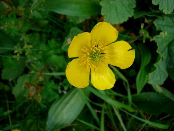 Toutes les fleurs de couleur jaune Dsc02011