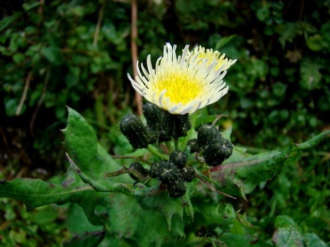 Toutes les fleurs de couleur jaune Dsc02012