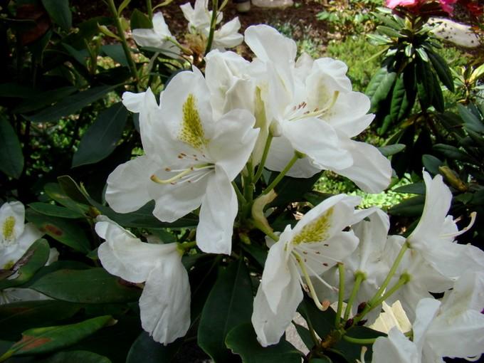 toutes les fleurs de couleur blanche  Dsc02634